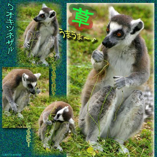 わお草うまうまブログ用.JPG