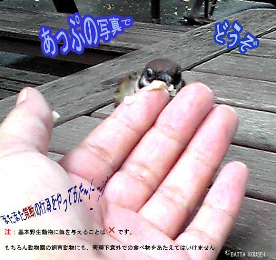 上野動物園の雀-のコピー.jpg