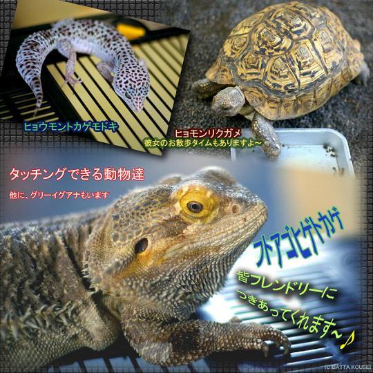 動物村タッチOK動物ブログ用.JPG