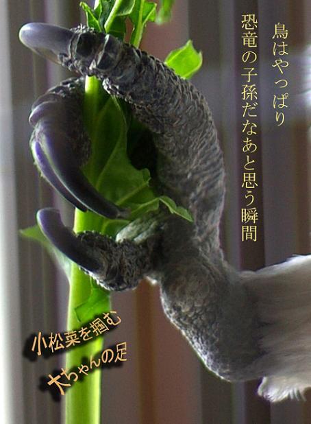 菜っ葉作品オマケ。恐竜の子ブログ用.jpg