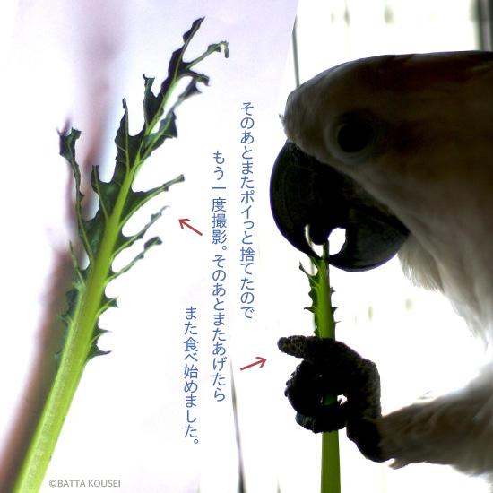 葉っぱ作品2ミクシィ用.jpg