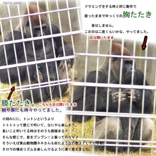 10タロウ3膝胸たたき・ブログ用.JPG