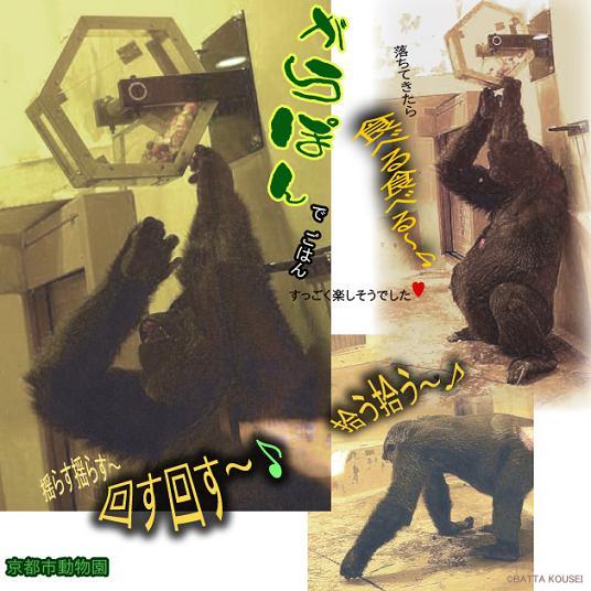 10京都ゲンキ・がらぽんブログ.JPG