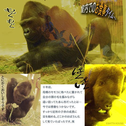 10京都ゴリラ2ブログ.JPG