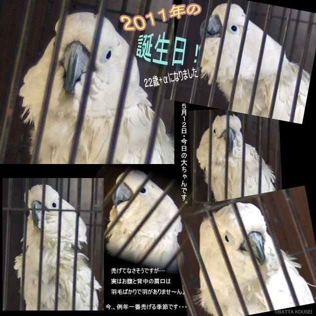 11・5・12大ちゃん.jpg