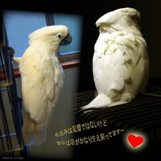 11夏の大ちゃん背中ブログ.JPG