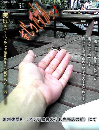 上野動物園の雀.jpg