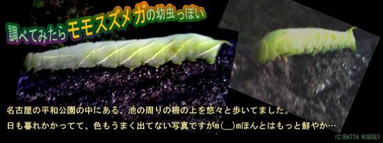 平和公園の芋虫ブログ用.JPG