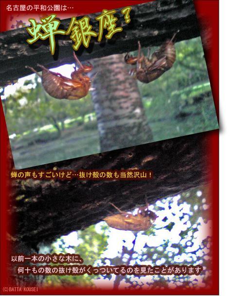 平和公園蝉の殻ブログ用.JPG