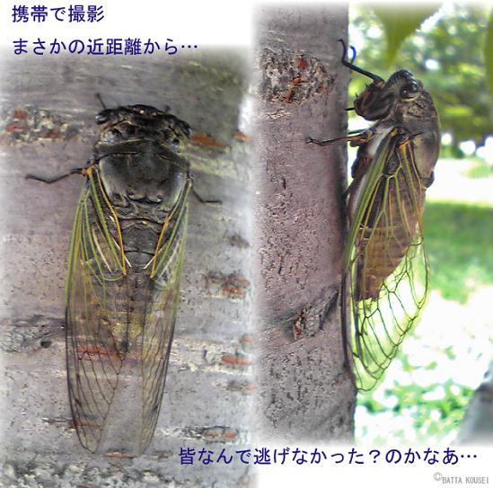 蝉の生る木2ブログ用.JPG